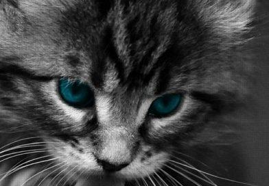 Котката – домашен лечител