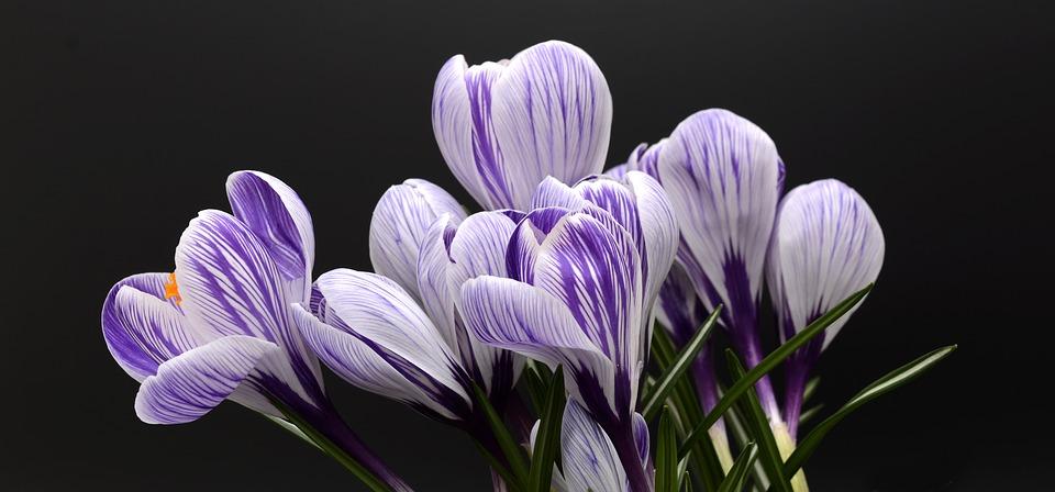 Днес настъпва пролетта