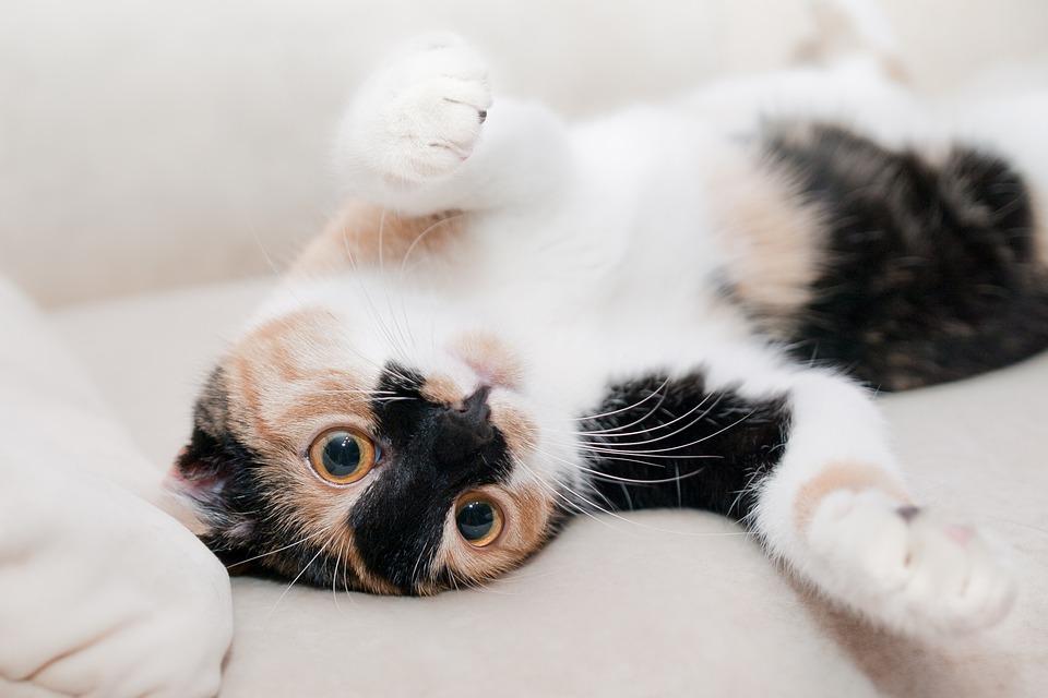 1 март – Световен ден на котките