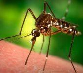 """Причини, поради които ви """"обичат"""" комарите и какво да правим срещу ухапване?"""