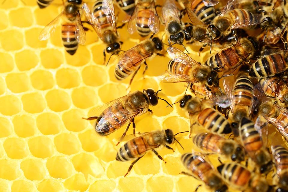 Kакъв мед да изберем?