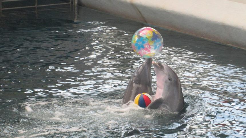 11 август – Варненският делфинариум e открит на този ден