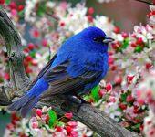 На 2 октомври отбелязваме Европейски ден на птиците