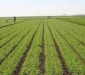 25 октомври е професионален празник на работещите в областта на земеделската наука