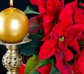 Историята на Коледната звезда