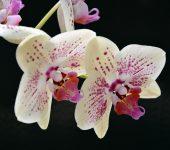 Орхидеята - екзотична красота