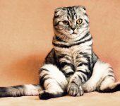 5 човешки храни и напитки, опасни за здравето на котките