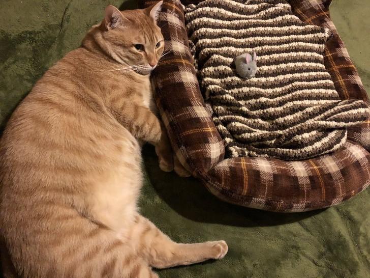 """""""Моята котка лежи на земята след като предаде леглото си на мишка."""""""
